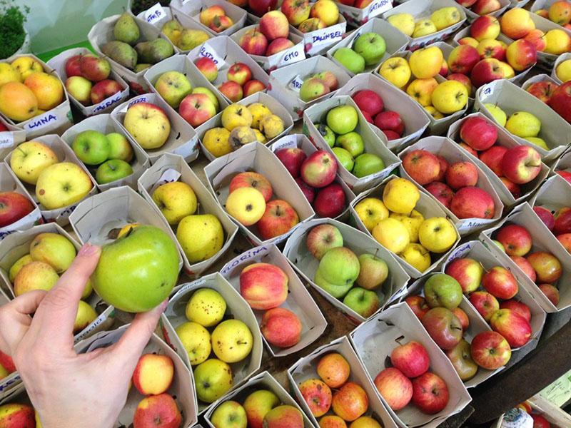 виды яблок для вашего сада