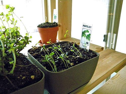 Для растений нужен свет