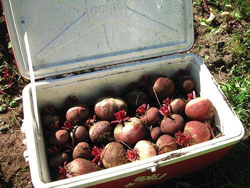 Хранение овощей в специальных ящиках