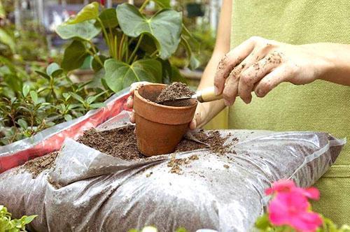 Подготовка почвы для высадки мандарина