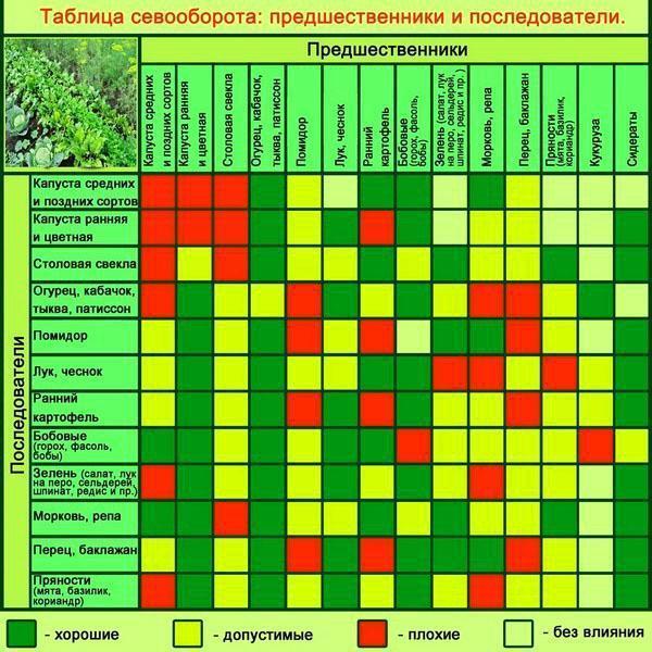 Таблица севооброта