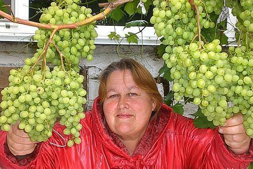 Такой урожай выращивают в Красноярске