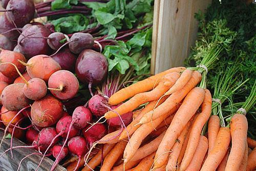 Можно ли замораживать вареную свеклу и морковь
