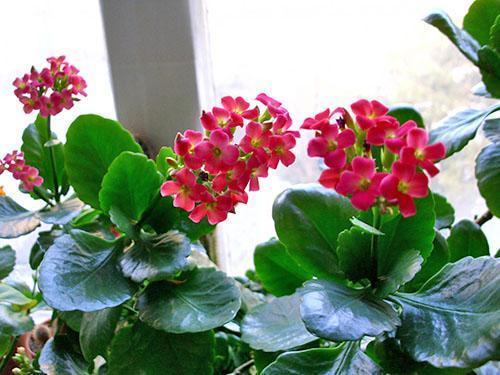 Молодые растения начинают цвести