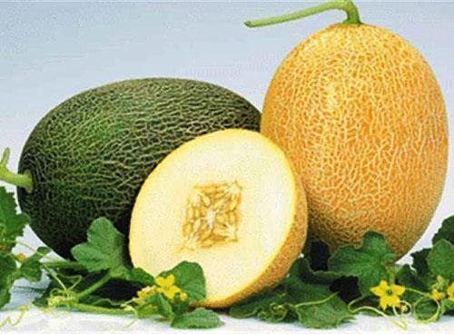 Мякоть и семена дыни обладают лечебными свойствами