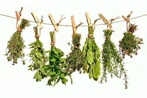 Один из способов сушки лекарственных растений в домашних условиях