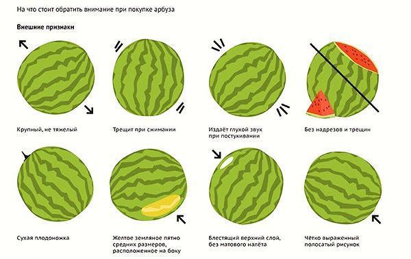 Правила выбора спелого сочного арбуза