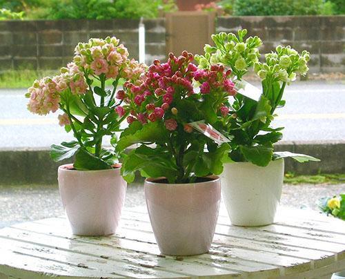 Расцветают молодые растения