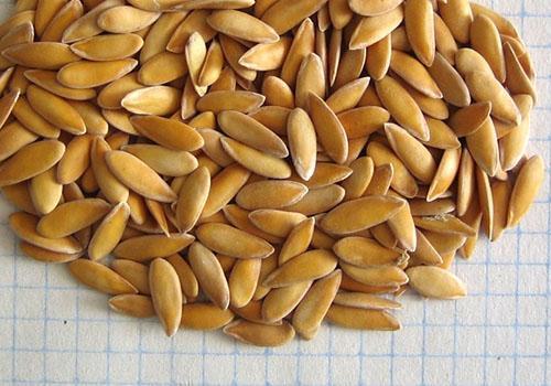Семена дыни тоже полезны