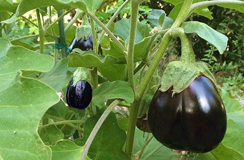 Соблюдение севооборота - гарантия хорошего урожая