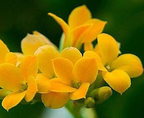 Такие цветы украсят любой интерьер