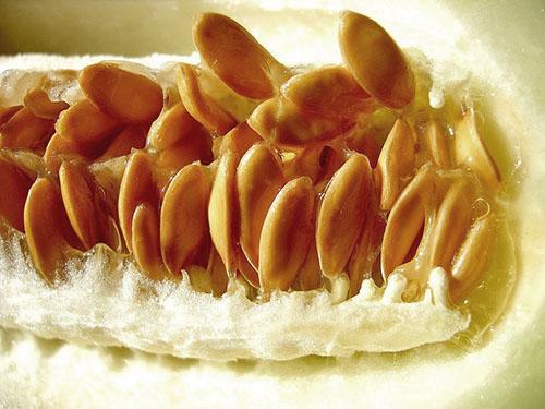 У дынных семян много полисахарида