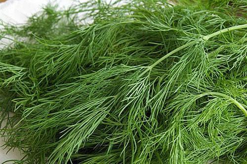 Зелень укропа поможет избавиться от угревой сыпи