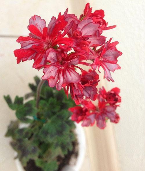 Цветет молодое растение