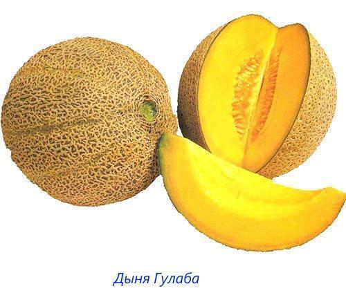 Дыня Гулаба