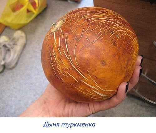 Дыня туркменка