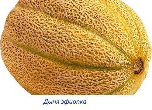 Дыня эфиопка