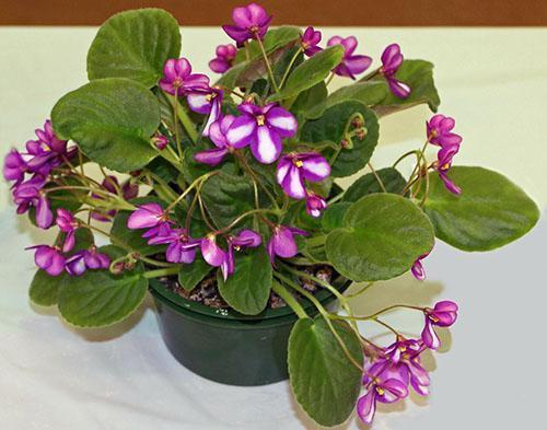 Калийно-фосфорные подкормки - один из гарантов цветения