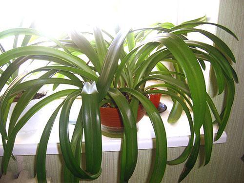 Необходима пересадка растений