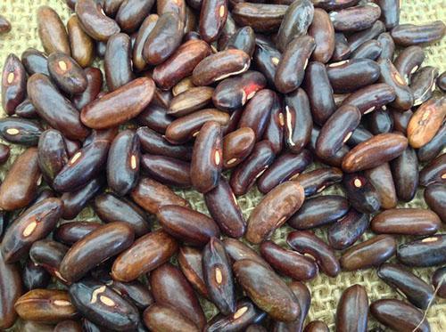 Плоды популярной во Франции фасоли