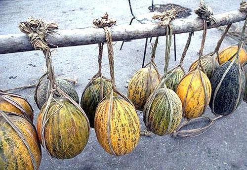 Поздние сорта узбекских дынь