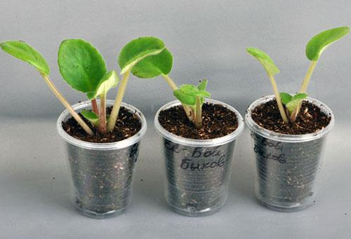 Развитие молодых растений