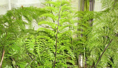 Большое красивое растение