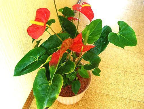 Для восстановления здоровья растения иногда достаточно его пересадить