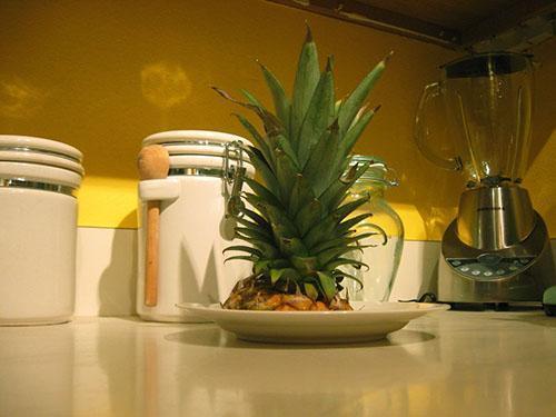 Из хохолка ананаса можно вырастить новое растение