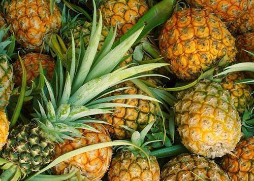 Из спелых плодов ананаса получают вкусный низкокалорийный сок
