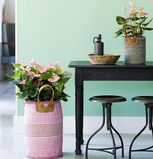 Небольшие комнатные растения с розовыми цветами