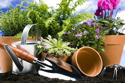Пересадка растений в домашних условиях