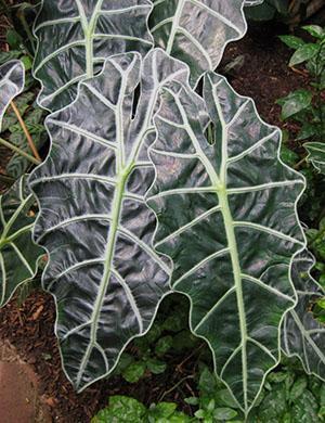 Своевременное внесение подкормок обеспечивает активное развитие растения