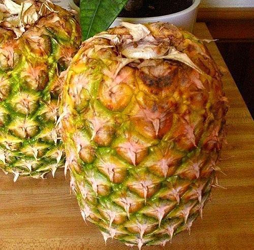 Так держат ананас дома на дозревании