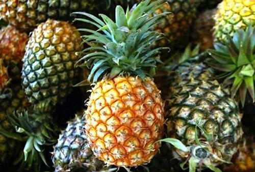 У спелого плода золотисто коричневая кора и зеленый хохолок