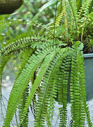 Заботливый уход - гарантия хорошего развития растения
