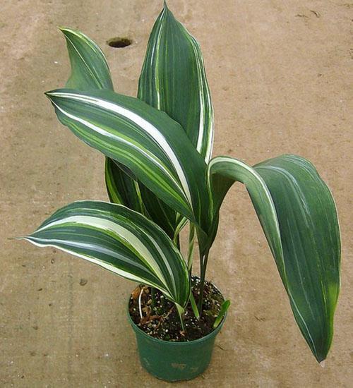 Здоровое красивое растение