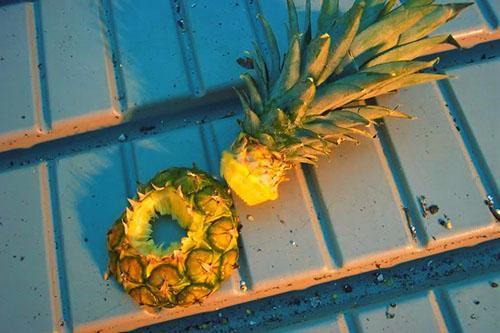 Зеленую верхушку плода используют для выращивания нового ананаса