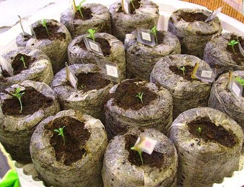 Материнские характеристики растения гибрида не передаются при семеном размножении