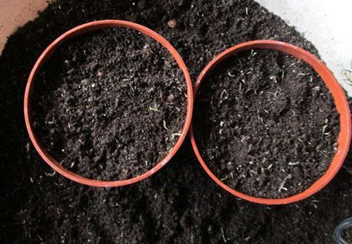 Почва для ахименесов