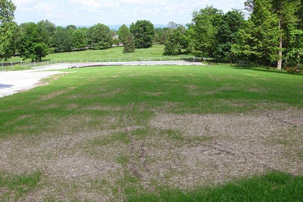 Газон после осеннего внесения азотных удобрений