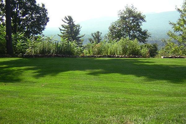 семена травы для газона купить в шушарах