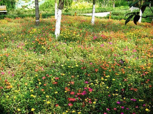 Мавританский газон привлекает внимание обилием цветов