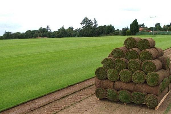 Срезка и подготовка рулонного газона к транспортировке и продаже