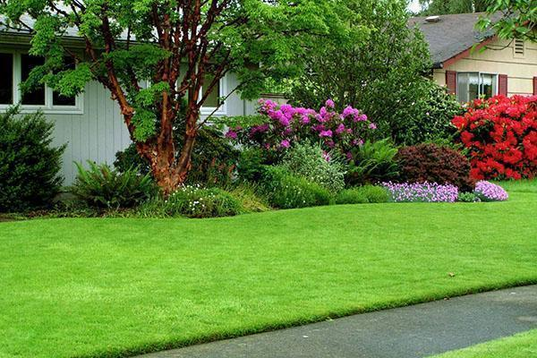 Ухоженный красивый газон