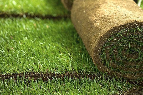 Укладывать рулонный газон лучше всего весной