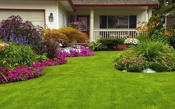Украсить даже самое скромное подворье может газон