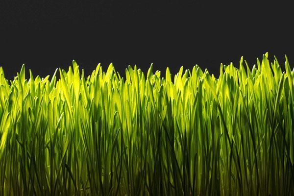 В весеннее время газон нуждается в удобрениях