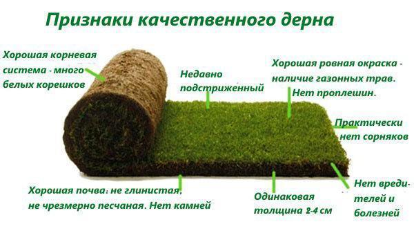 Выбор качественного рулонного газона