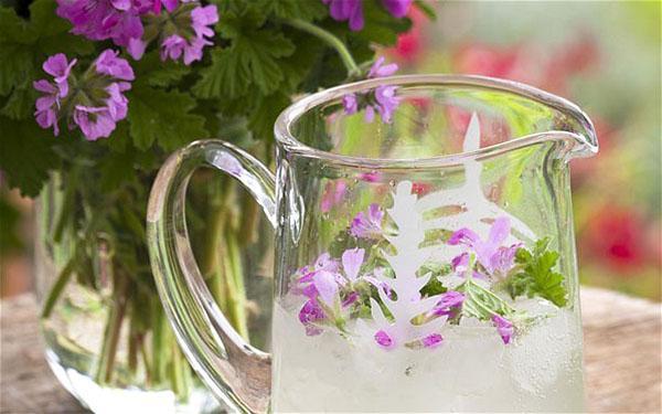 Целебный напиток из герани